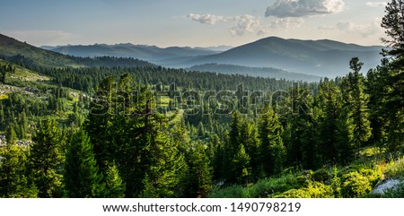 Photo of  Beautiful sunset view in cedar forest in front of sayan mountain range, Ergaki national park, Krasnoyarsk region, Siberia, Russia