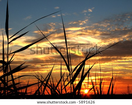 Beautiful sunset with bamboo and herb silhouettes