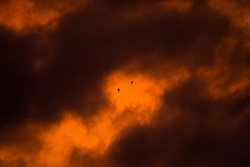 Beautiful sunset with birds flying. Silhouette of two birds flying between the orange and yellow clouds in the golden hour.