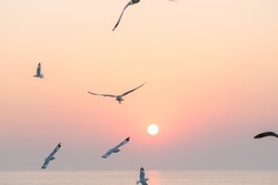 Beautiful sunset with flock of seagulls flying over the sea. Seagulls in the clouds of blue sky. Seagull flying in the blue sky. A seagull is flying in the sky. Seagull flying sky.