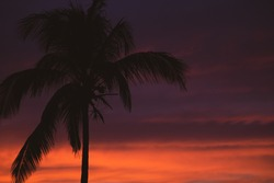 Beautiful sunset with palm trees silhouette, unfocused. Calm evening with colorful dusk sky, soft focus. Twilight in tropical resort. Idyllic sunset with palm trees. Sunset on the beach. Calm evening