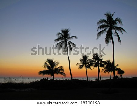 beautiful sunset with palms silhouettes over ocean