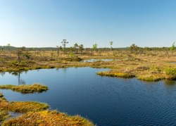 beautiful swamp landscape with blue sky and water, traditional swamp plants, mosses and trees, bog in summer