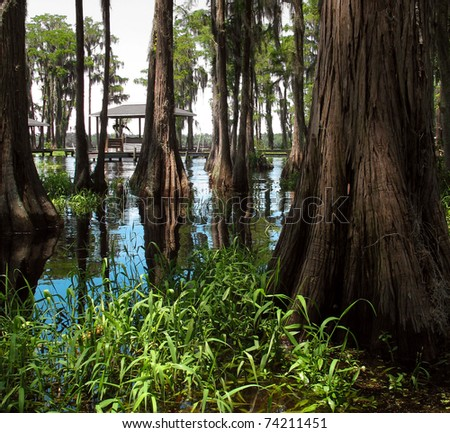 Beautiful swamp on a bright sunny day