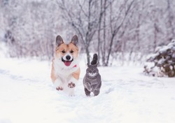beautiful tabby cat and red Corgi dog run in the winter garden on fluffy snow