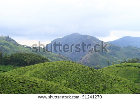 Beautiful tea plantations of Munnar, India