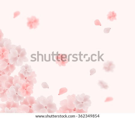 Beautiful tender cherry blossom flowers and petals flying in the spring wind. Pink and white Japanese sakura flower background. Blurred and sharp details of spring mood, love and happiness.