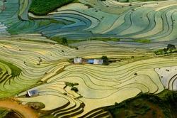 Beautiful terraced rice field in Lao cai province in Vietnam
