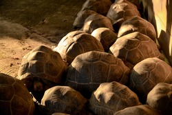 Beautiful texture of turtle carapace, Sulcata Tortoise in nature with light and shadow.
