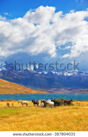 Beautiful thoroughbred horse grazing in a meadow near the lake. On the horizon, towering cliffs Torres del Paine #387804031