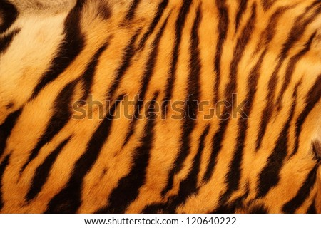 beautiful tiger fur - colorful texture with orange, beige, yellow and black