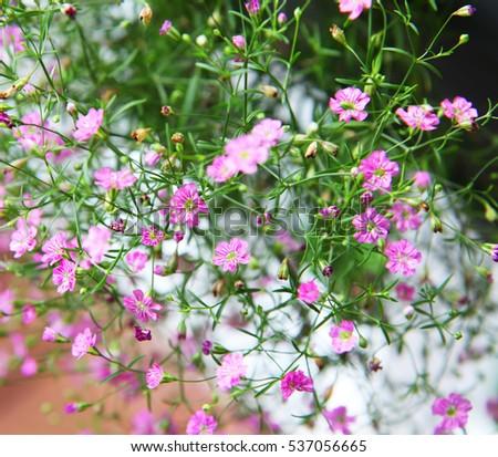Free photos pink babys breath flowers in the garden avopix beautiful tiny pink babys breath flowers 537056665 mightylinksfo