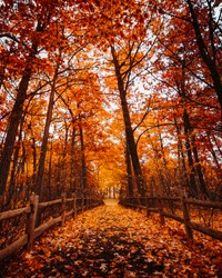BEAUTIFUL TORONTO FOREST PATHWAY IN FALL/AUTUMN - Gorgeous orange forested path with colorful foliage and fallen leaves on ground. Nature park and landscape scene. Toronto, Ontario, Canada