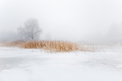 Beautiful tranquil winter scenery.  Snowy river coast with yellow dry reeds on foreground. Trees and canes on frozen lake coast. Winter foggy landscape.