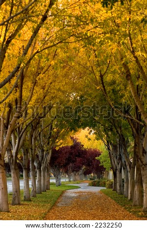 Beautiful, tree-covered sidewalk, surrounded with bright Autumn Scenery