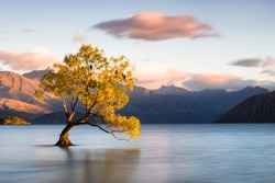 Beautiful tree inside the Lake Wanaka, New Zealand.