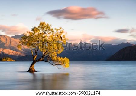 Beautiful tree inside the Lake Wanaka, New Zealand.