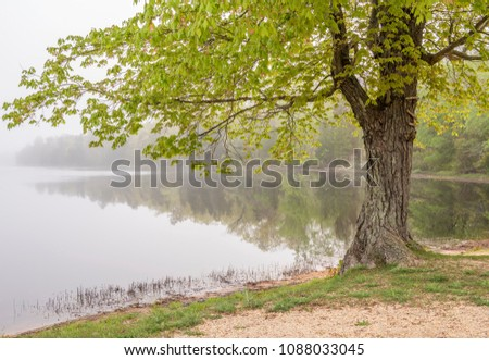 Beautiful tree next to the lake at Wharton State Forest, New Jersey.