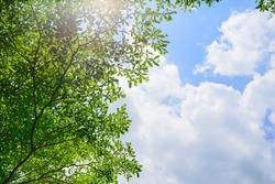 Beautiful tree on blue sky background