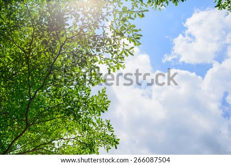 Beautiful tree on blue sky background