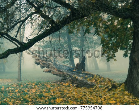 Beautiful tree stomps covered in leaves on a cold foggy autumn morning