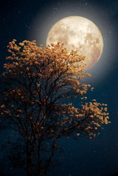 Beautiful tree yellow flower blossom with milky way star in night skies full moon - Retro fantasy style artwork with vintage color tone.