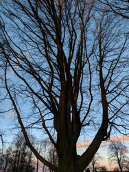 Beautiful trees and branches glowing against a bright winter sky at sunset, at Yeoman Hill Park, Nottinghamshire, UK