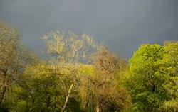 Beautiful trees in spring sunshine on dark blue moody sky