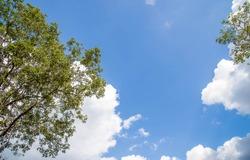 Beautiful trees on sky background,tree,sky