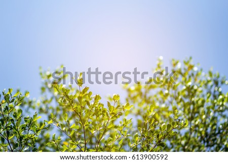 Beautiful trees on sky background,tree,sky #613900592
