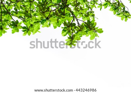 Beautiful trees on white background, trees,top #443246986