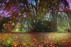 Beautiful Trees surrounded by spiritual light orbs - multicoloured fairy like light spheres floating around a large tree with an ethereal atmosphere and copy space beneath on autumnal leaf covered gr