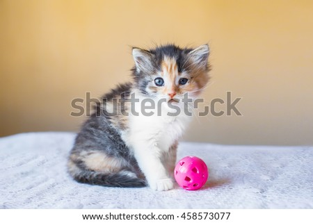 beautiful tricolor variegated kitten with toy ball. age 3 months #458573077