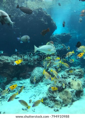 Beautiful Tropical Aquarium Fish In Japan With Various Types Of Fish
