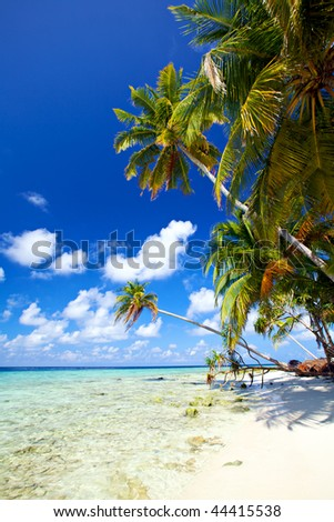 Beautiful tropical beach!