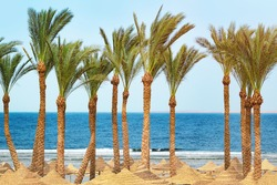 beautiful tropical beach with a row of palm trees and blue sea ocean water. Travel destination scenic.