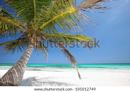 beautiful tropical beach with coconut palm tree, Tropical white sand beach, palm tree