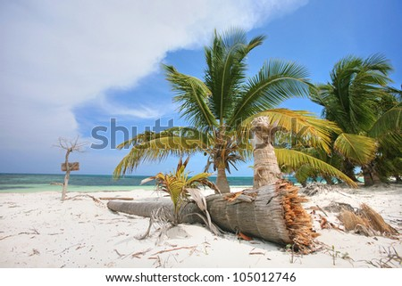 beautiful tropical beach with coconut palm trees, coconut palm tree on a beach, tropical coast