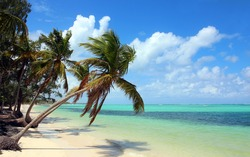 Beautiful tropical beach with coconut palms and blue sky. The picture was taken at the Bavaro beach, Punta Cana, Dominican Republic