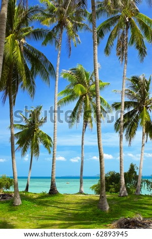 Beautiful tropical beach with palmtrees.