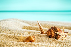 Beautiful tropical beach with seashells lying on the golden sand against a backdrop of a tranquil blue ocean and sunny summer sky