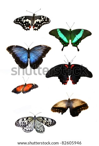 Beautiful tropical butterflys