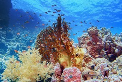 Beautiful tropical coral reef with diverse hard and soft corals and shoal of coral fish
