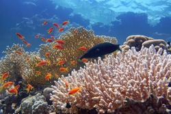 Beautiful tropical coral reef with diverse hard corals and shoal of coral fish