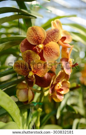 Beautiful tropical flowers, exotic nature of Thailand