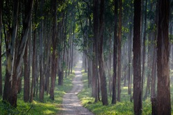 Beautiful tropical green forest with morning sunlight -A path through a forest in wayanad kerala.