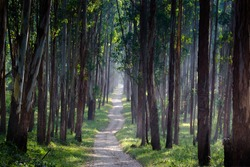 Beautiful tropical green forest with morning sunlight - wayanad kerala, india