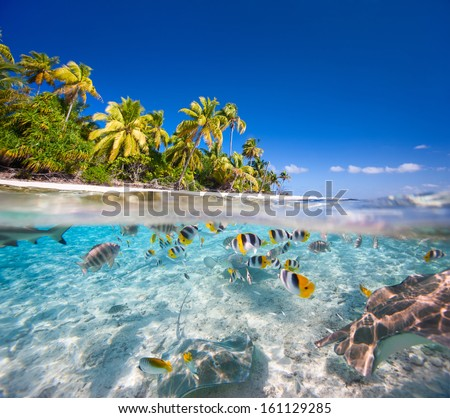 ShutterStock Beautiful tropical island in French Polynesia under and ...