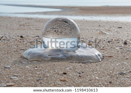 Beautiful Tropical Landscape seen through a Glass Orb. Glass orb by the sea and beach with waves crashing on shore. #1198410613