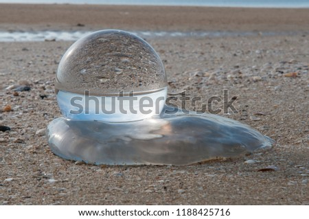 Beautiful Tropical Landscape seen through a Glass Orb. Glass orb by the sea with waves crashing on shore #1188425716